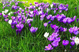 Zwiastuny wiosny | MIĘDZYRZECZ