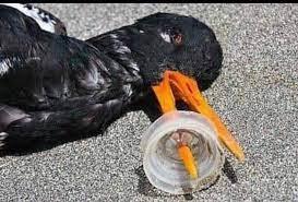Zobacz zdjęcia zwierząt, które cierpią przez naszą nieodpowiedzialność |  Fotoblogia.pl